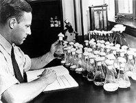 Пенициллины и цефалоспорины